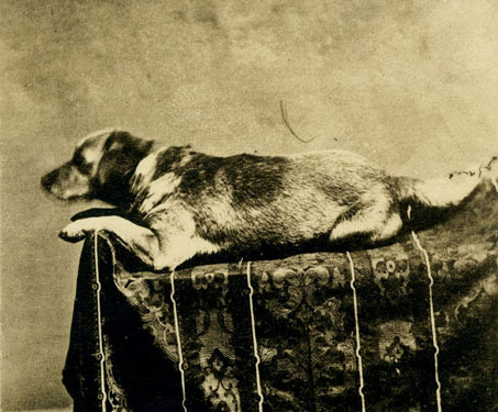 Fido (probably in 1865)
