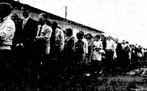 "Prospective evening students line up to register at ""Plywood U"" in September 1967 (courtesy State Journal-Register)"
