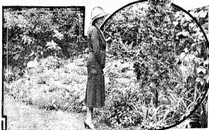 Regina Littlejohn in the rock garden where her husband killed himself (Courtesy SJ-R)